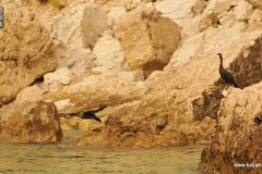 kayak-expe.fr-Camp-de-base-Meganissi-iles-Ioniennes-Grèce-47